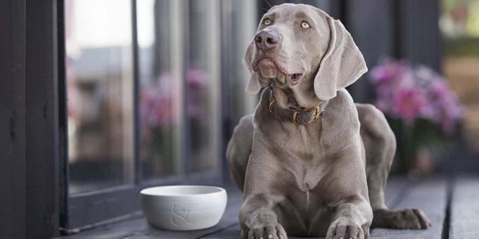 Comida natural perros