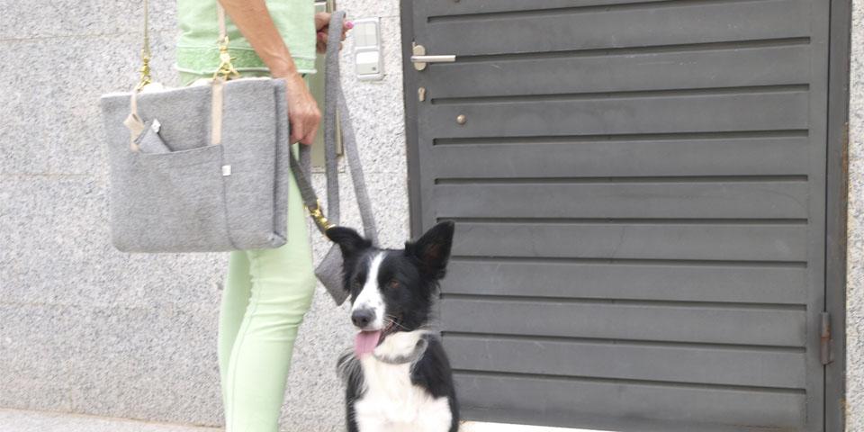 viajar con el perro